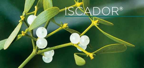 Iscador, Mistletoe extract for healing from cancer