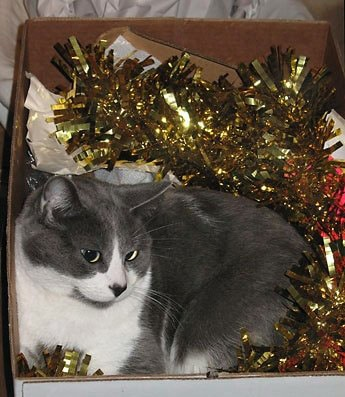 grey and white cat snuggled in gold foil garland