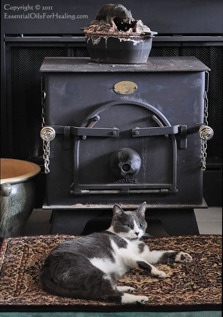 photo of gray and white cat enjoying the warmth of a woodstove