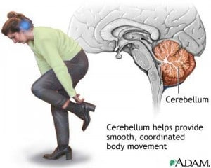 illustration of cerebellum brain's center of balance and smooth muscle movement