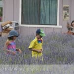 chinese kids running through rows of lavender