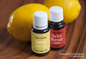 2 Bottles of essential oils Lemon and a Tea Tree with Rosemary blend in front of two Meyer Lemons
