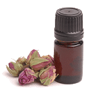 Roae essential oil in vial with rose beds