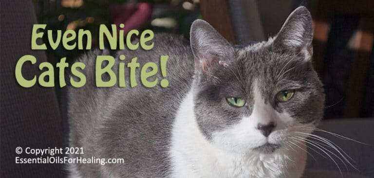 gray and white cat with green eyes for cat bite article