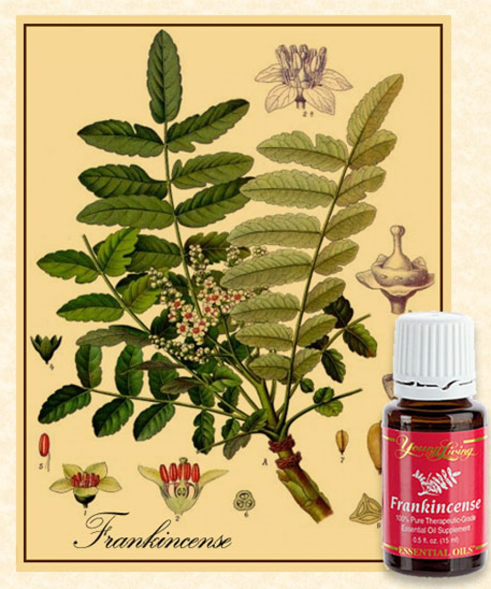 Young Living Frankincense Essential OIl with botanical illustration