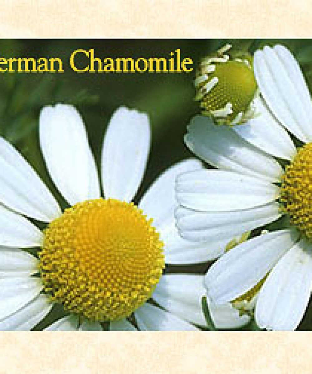 photo of german chamomile flowers therapeutic essential oil bottle by original swiss aromatics