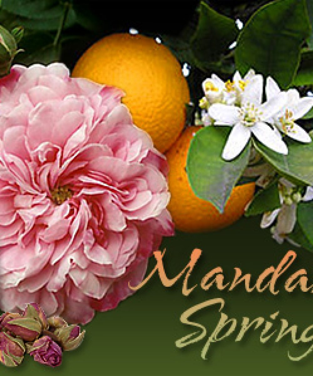 Mandarin Spring™ a lovely perfume oil with Rose & Citrus key notes