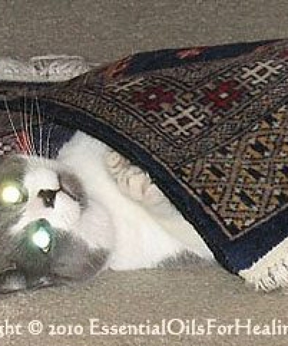 playful cat under rug eyes glowing with flash reflection