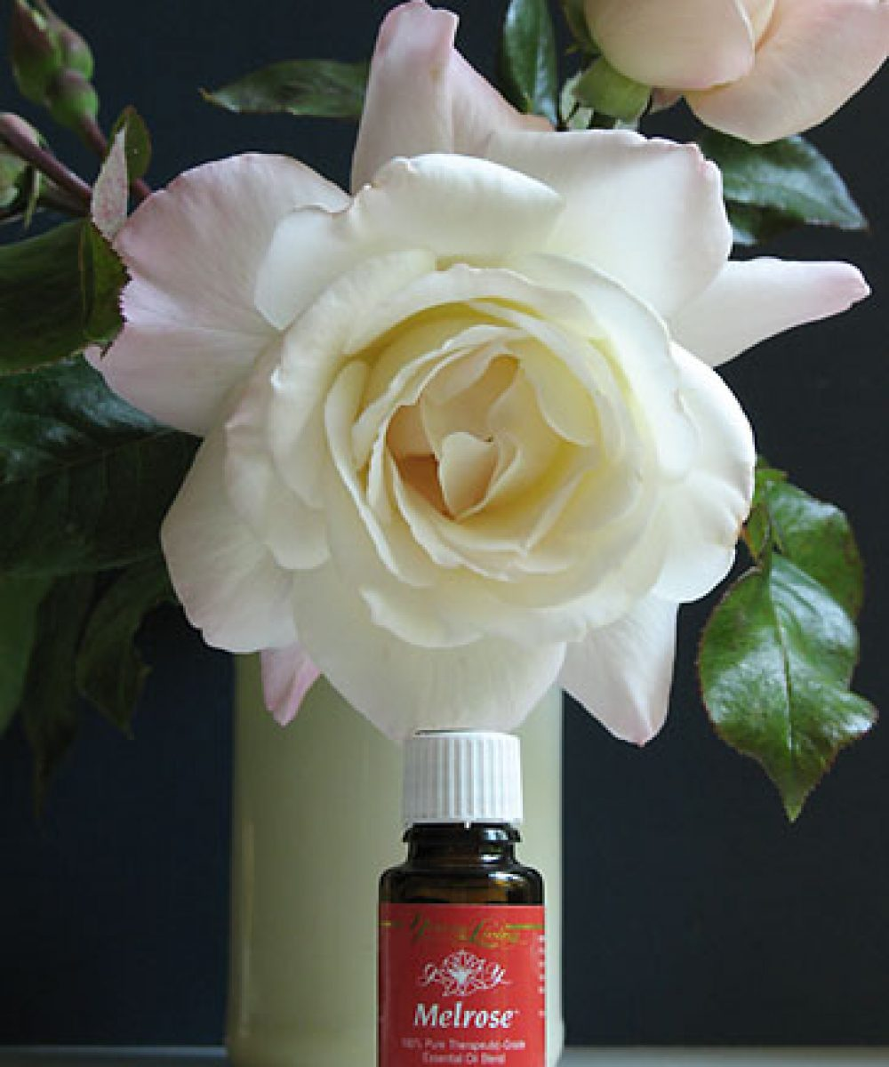 Young Living Essential Oils' Melrose blend is a rose gardener's friend. Copyright © 2009 Cynthe Brush. All Rights Reserved.